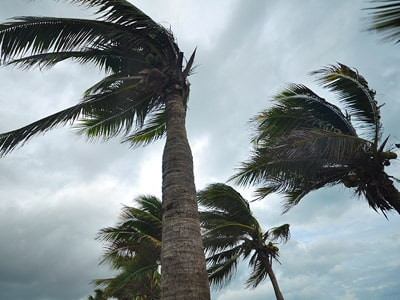 Sarasota Storms Prompt Businesses to Prepare for Tornado Safety