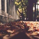 Floor mats for fall